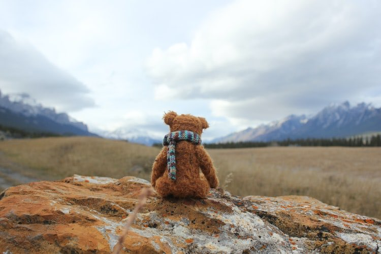 Teddy bear looking out over field.