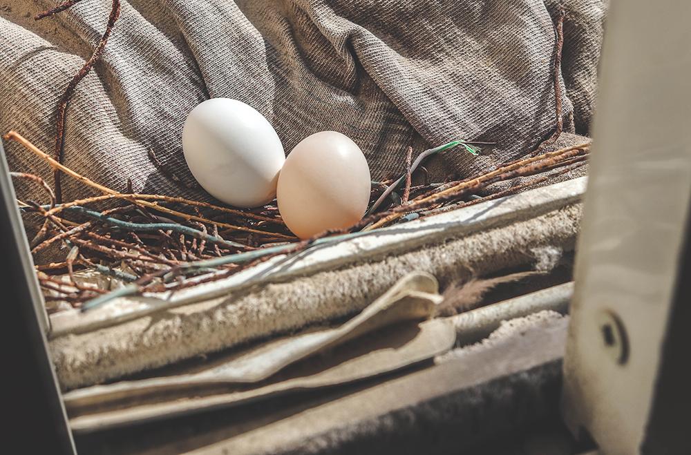 Pigeon Eggs